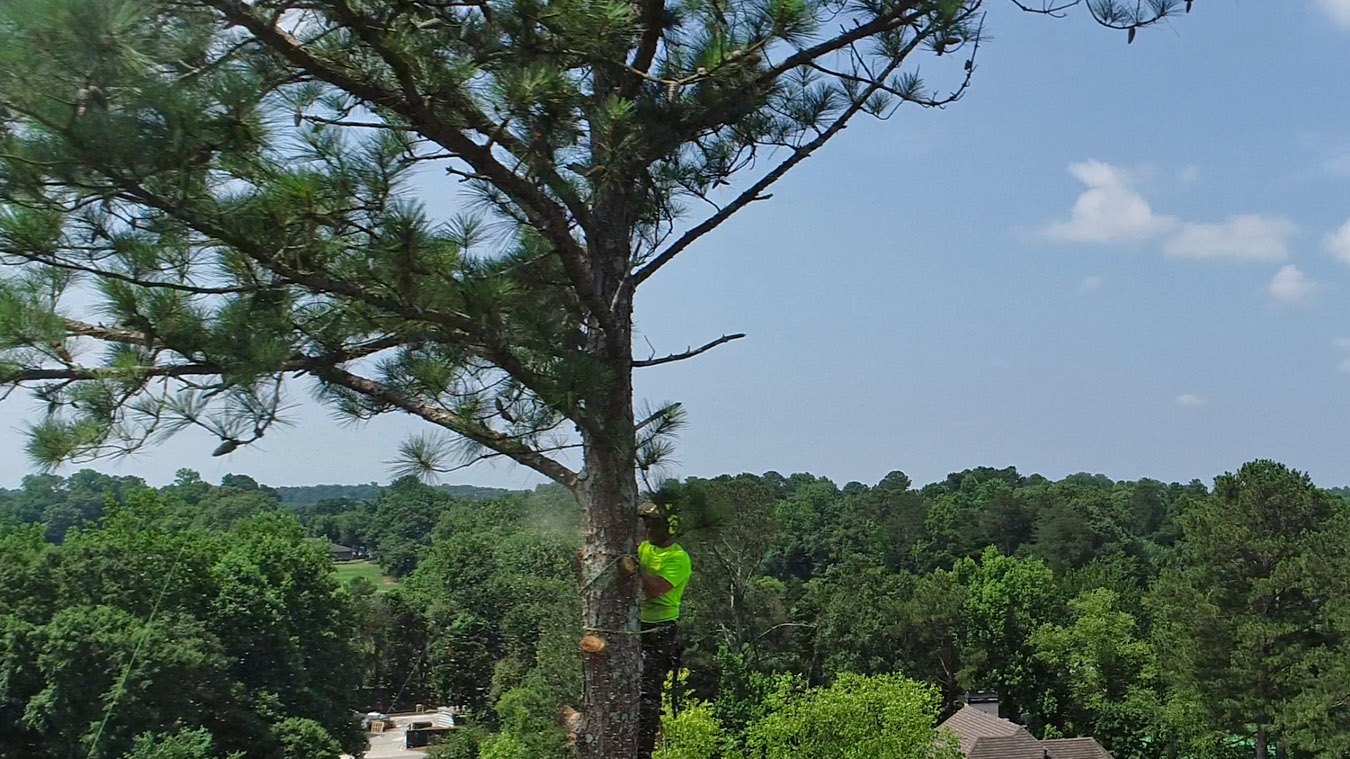 tree removal service kennesaw ga