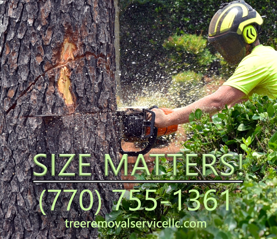 tree removal kennesaw ga