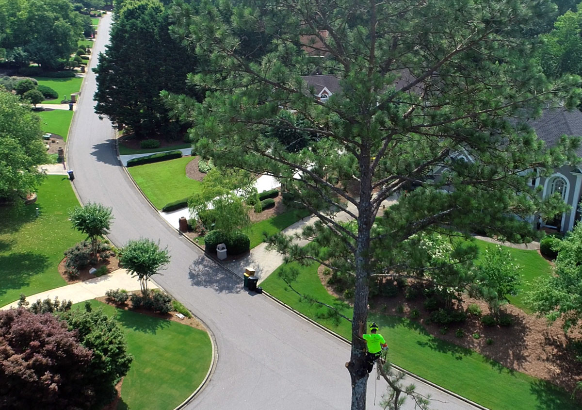 tree service gainesville ga
